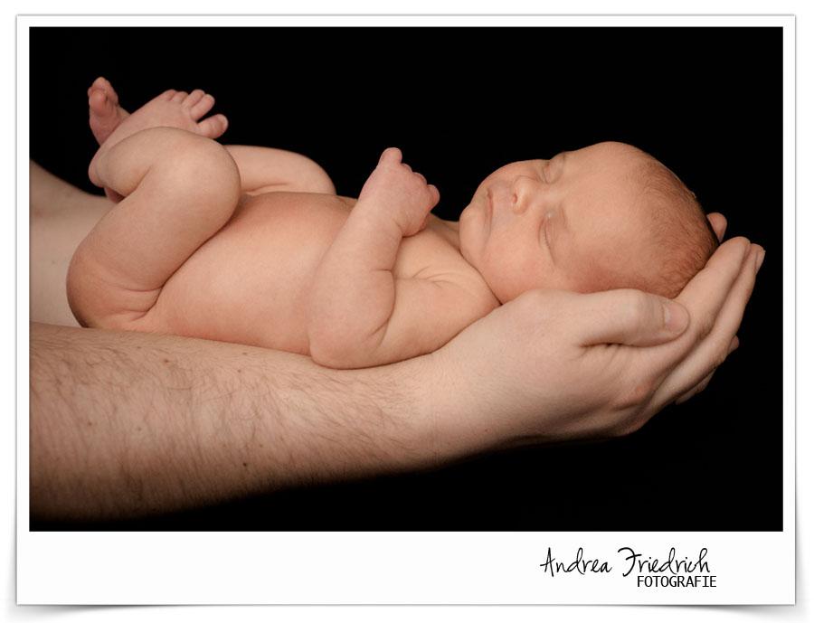 Andrea Friedrich Fotografie